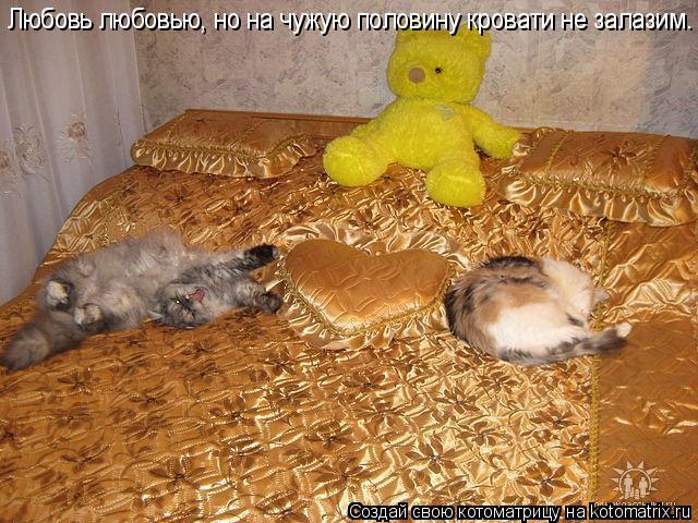 Котоматрица: Любовь любовью, но на чужую половину кровати не залазим.