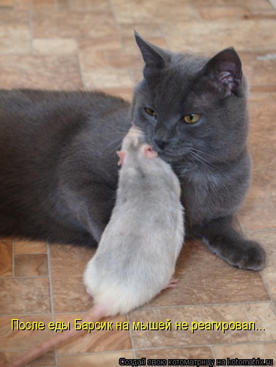 Котоматрица: После еды Барсик на мышей не реагировал...