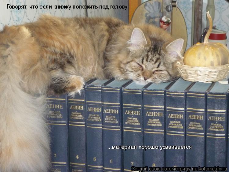 Котоматрица: Говорят, что если книжку положить под голову ...материал хорошо усваивается
