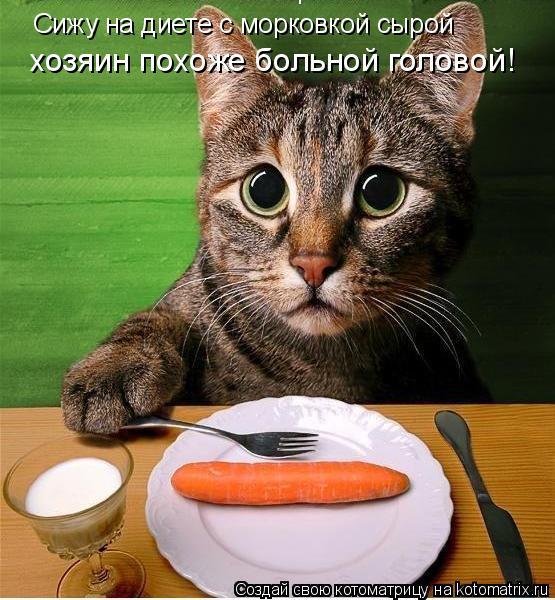Котоматрица: Сижу на диете с морковкой сырой хозяин похоже больной головой!