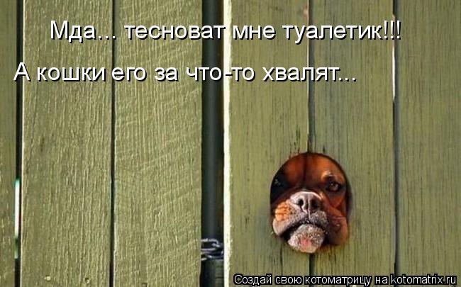 Котоматрица: Мда... тесноват мне туалетик!!! А кошки его за что-то хвалят...