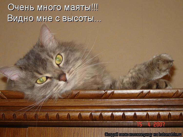 Котоматрица: Очень много маяты!!! Видно мне с высоты...