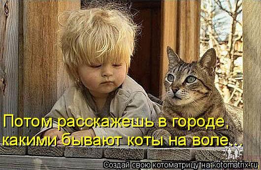 Котоматрица: Потом расскажешь в городе, какими бывают коты на воле...