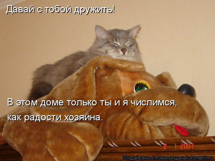 Котоматрица: Давай с тобой дружить! В этом доме только ты и я числимся, как радости хозяина.