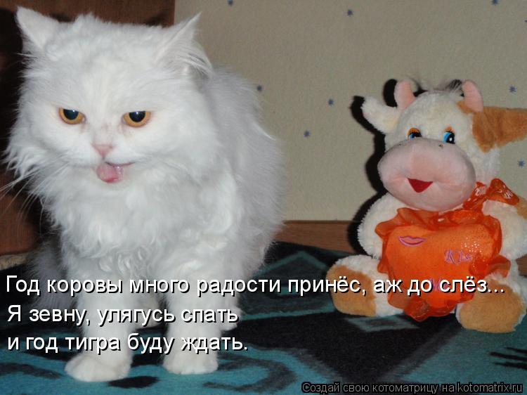 Котоматрица: Год коровы много радости принёс, аж до слёз... Я зевну, улягусь спать  и год тигра буду ждать.