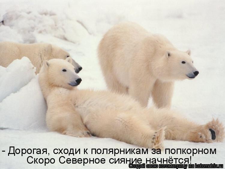 Котоматрица: - Дорогая, сходи к полярникам за попкорном Скоро Северное сияние начнётся!