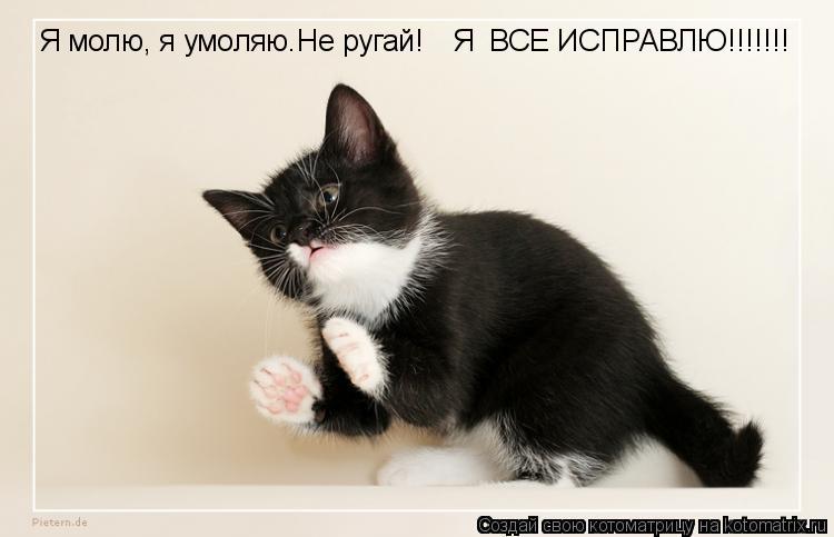 Котоматрица: Я молю, я умоляю.Не ругай! Я  ВСЕ ИСПРАВЛЮ!!!!!!!