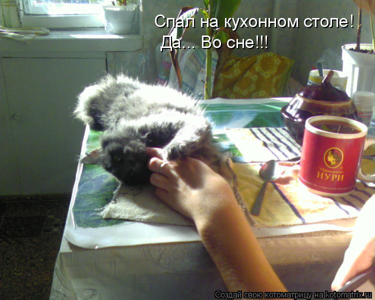 Котоматрица: Спал на кухонном столе! Да... Во сне!!!