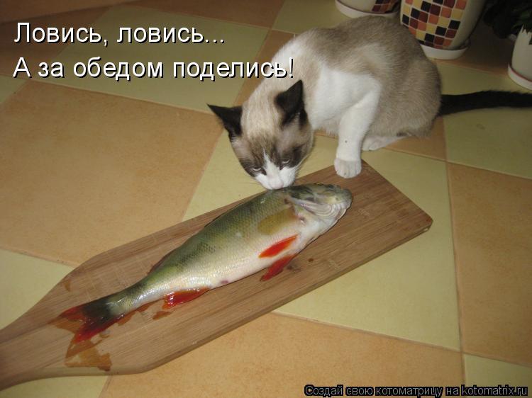 Котоматрица: Ловись, ловись... А за обедом поделись!