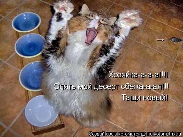 Котоматрица: Хозяйка-а-а-а!!!! Опять мой десерт сбежа-а-ал!!! Тащи новый! →