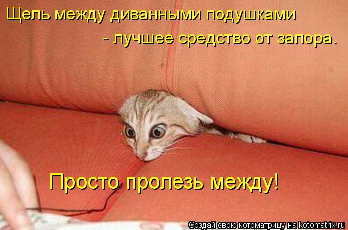 Котоматрица: Щель между диванными подушками - лучшее средство от запора. Просто пролезь между!