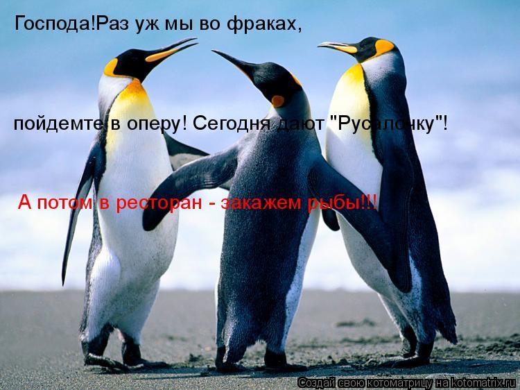 """Котоматрица: Господа!Раз уж мы во фраках, пойдемте в оперу! Сегодня дают """"Русалочку""""! А потом в ресторан - закажем рыбы!!!"""
