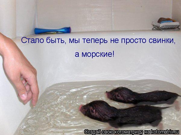 Котоматрица: Стало быть, мы теперь не просто свинки, а морские!