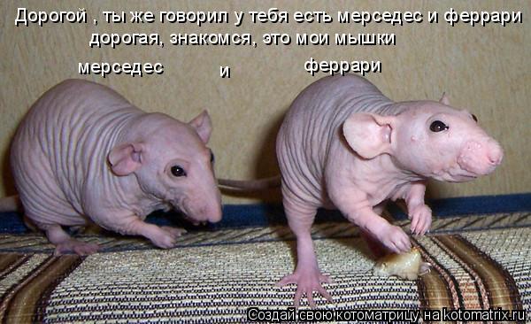 Котоматрица: Дорогой , ты же говорил у тебя есть мерседес и феррари дорогая, знакомся, это мои мышки  мерседес и  феррари