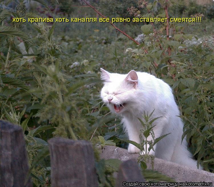 Котоматрица: хоть крапива хоть канапля все равно заставляет смеятся!!!