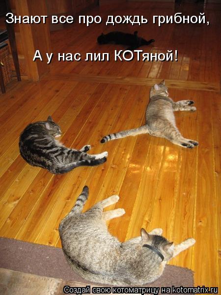 Котоматрица: Знают все про дождь грибной, А у нас лил КОТяной!