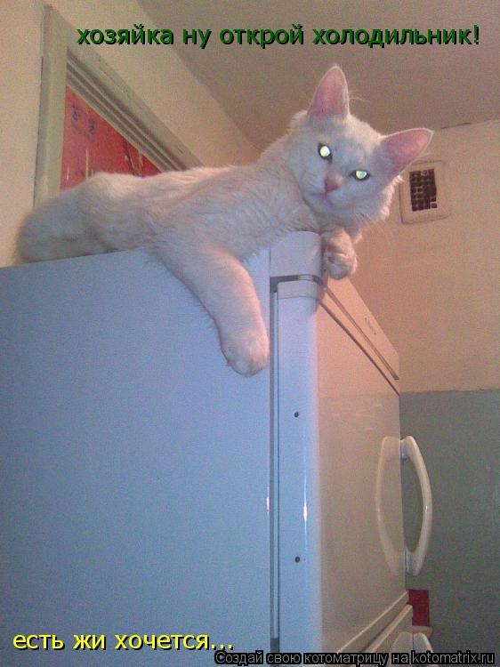 Котоматрица: хозяйка ну открой холодильник!  есть жи хочется...