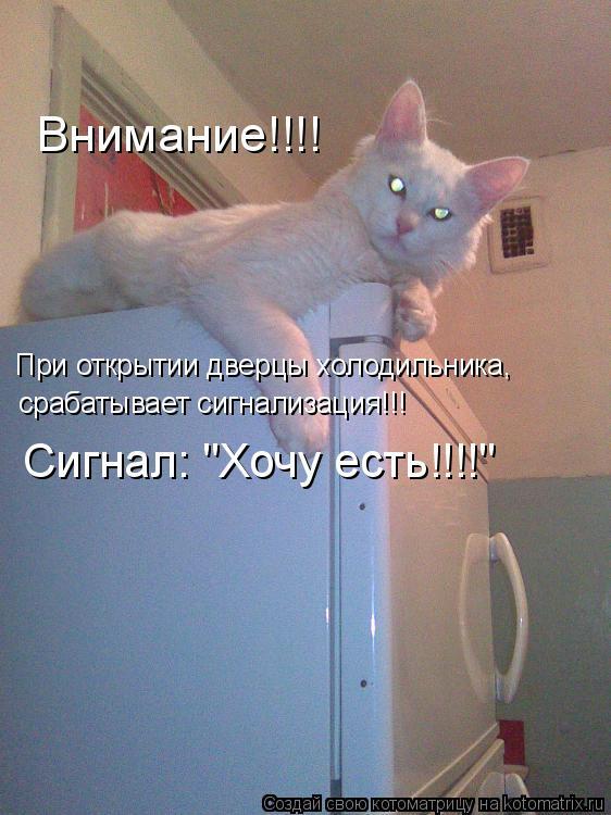 """Котоматрица: При открытии дверцы холодильника, Внимание!!!! срабатывает сигнализация!!! Сигнал: """"Хочу есть!!!!"""""""