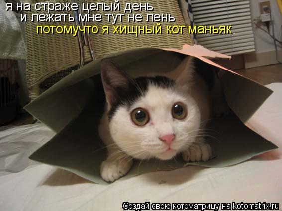 Котоматрица: я на страже целый день и лежать мне тут не лень потомучто я хищный кот маньяк