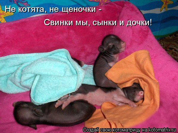 Котоматрица: Не котята, не щеночки -  Свинки мы, сынки и дочки!