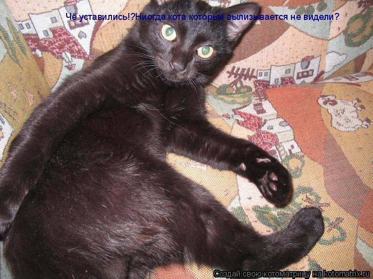 Котоматрица: Чё уставились!?Ниогда кота который вылизывается не видели?