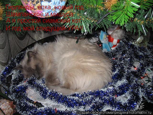 Котоматрица: Гирлянды, елка, новый год.  Шампанское и мишура.  А я простой сиамский кот.  И год мой следущий-УРА!!