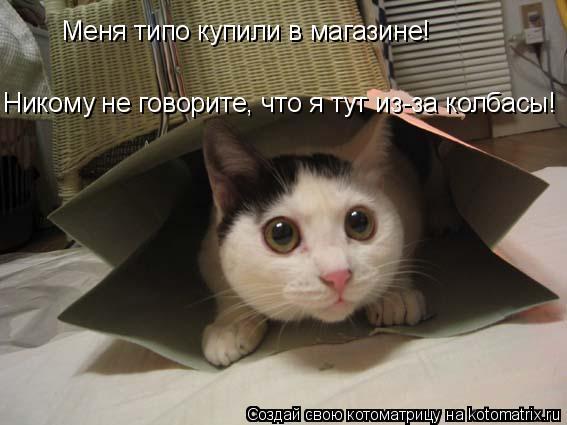 Котоматрица: Меня типо купили в магазине! Никому не говорите, что я тут из-за колбасы!