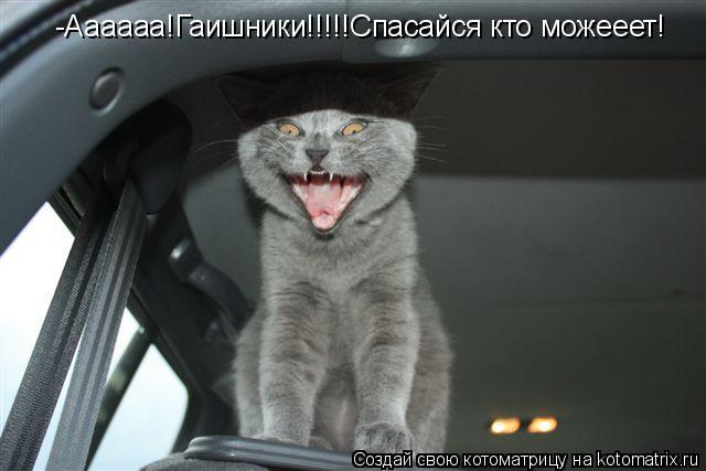 Котоматрица: -Аааааа!Гаишники!!!!!Спасайся кто можееет!