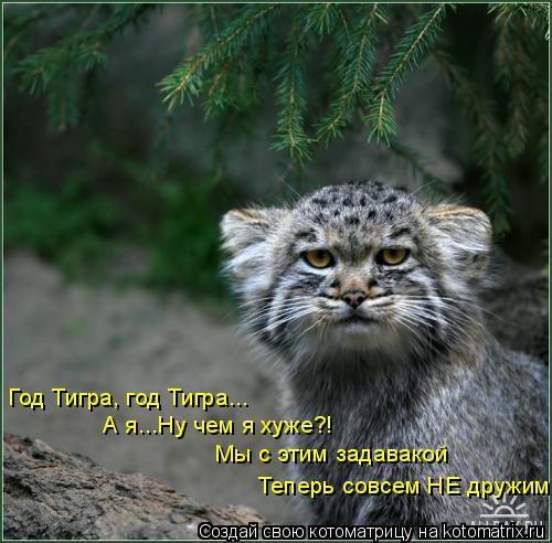 Котоматрица: Год Тигра, год Тигра... А я...Ну чем я хуже?! Мы с этим задавакой Теперь совсем НЕ дружим!