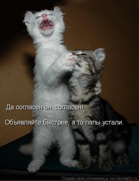 Котоматрица: Да согласен он, согласен! Объявляйте быстрее, а то лапы устали.