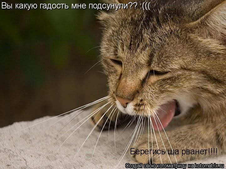 Котоматрица: Вы какую гадость мне подсунули?? :((( Берегись ща рванет!!!!