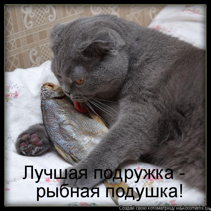 Котоматрица: Лучшая подружка -  рыбная подушка!