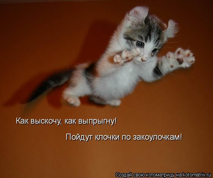 Котоматрица: Как выскочу, как выпрыгну! Пойдут клочки по закоулочкам!