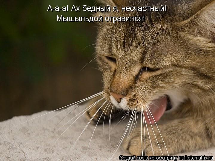 Котоматрица: А-а-а! Ах бедный я, несчастный!  Мышыльдой отравился!