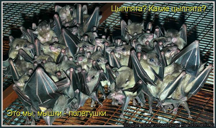Котоматрица: Цыплята? Какие цыплята? Это мы, мышки - полетушки.
