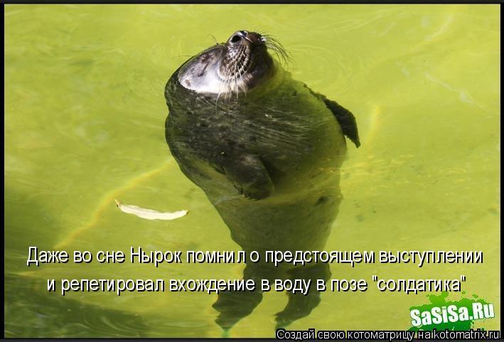 """Котоматрица: Даже во сне Нырок помнил о предстоящем выступлении  и репетировал вхождение в воду в позе """"солдатика"""""""
