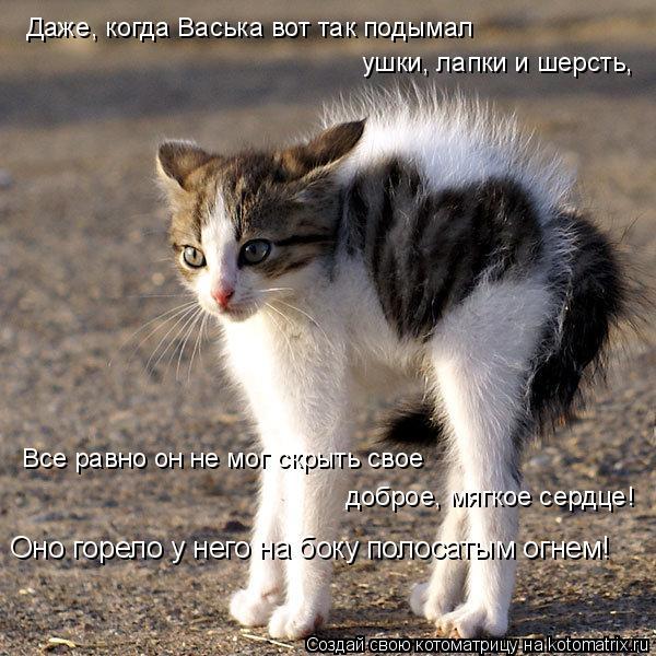 Котоматрица: Даже, когда Васька вот так подымал  ушки, лапки и шерсть,  Все равно он не мог скрыть свое  доброе, мягкое сердце! Оно горело у него на боку пол