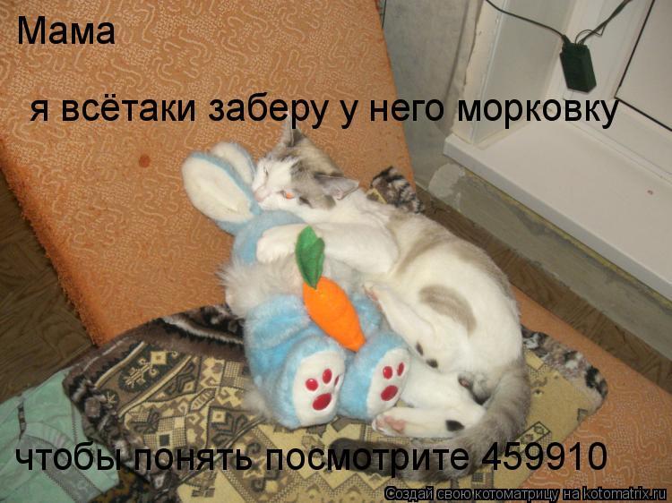 Котоматрица: Мама я всётаки заберу у него морковку чтобы понять посмотрите 459910