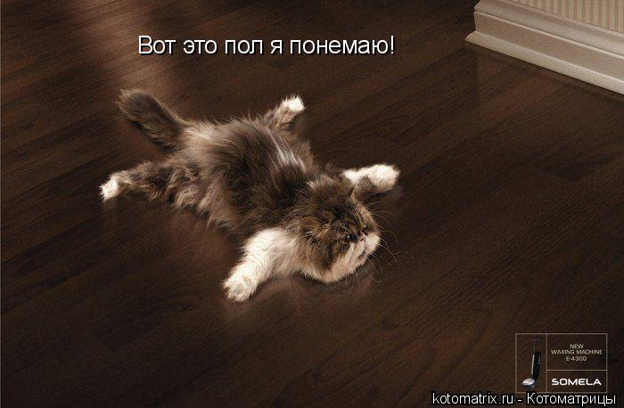 Котоматрица: Вот это пол я понемаю!