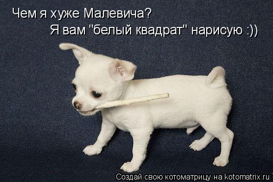"Котоматрица: Чем я хуже Малевича? Я вам ""белый квадрат"" нарисую :))"