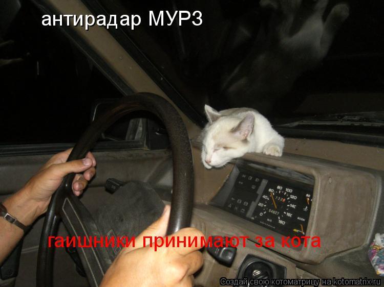 Котоматрица: антирадар МУРЗ гаишники принимают за кота