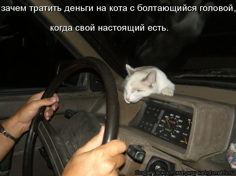 Котоматрица: зачем тратить деньги на кота с болтающийся головой, когда свой настоящий есть.