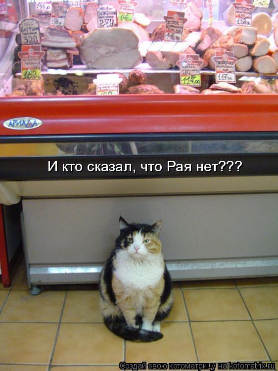 Котоматрица: И кто сказал, что Рая нет???