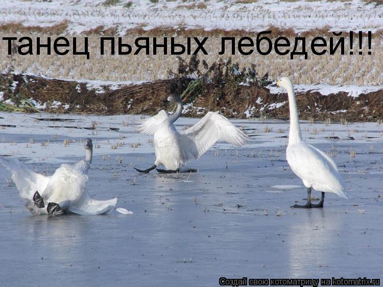 Котоматрица: танец пьяных лебедей!!!
