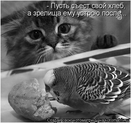 Котоматрица: - Пусть съест свой хлеб, а зрелища ему устрою после...