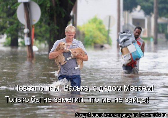 Котоматрица: Повезло нам, Васька, с дедом Мазаем!  Только бы не заметил. что мы не зайцы!