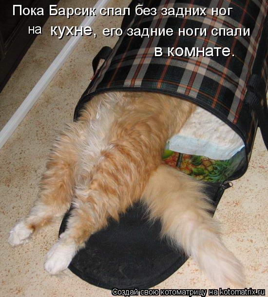 Котоматрица: Пока Барсик спал без задних ног на  кухне, его задние ноги спали в комнате.