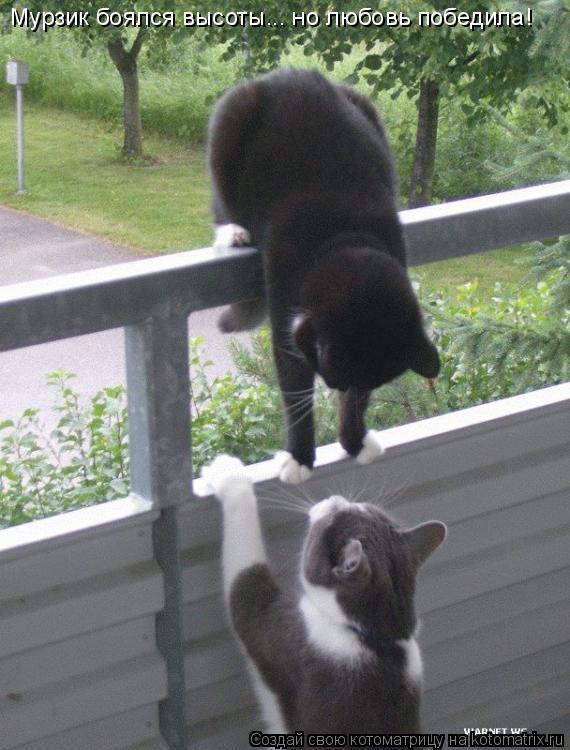 Котоматрица: Мурзик боялся высоты... но любовь победила!