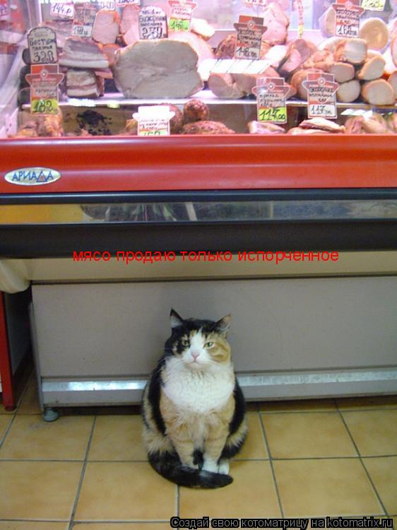 Котоматрица: мясо продаю только испорченное