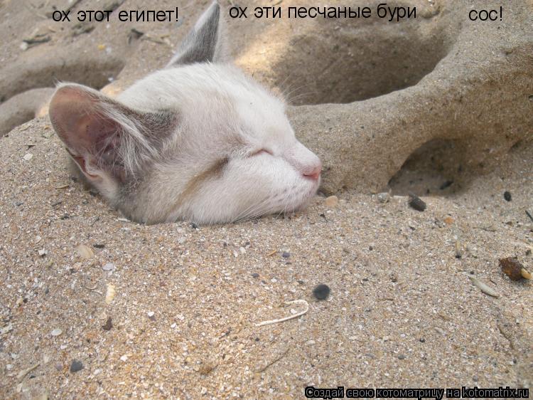 Котоматрица: ох этот египет! ох эти песчаные бури  сос!